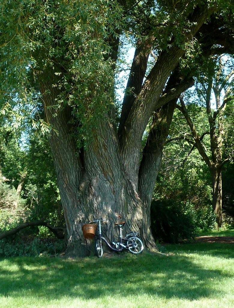 Friday Photo Contest: Last Day Entries | Wisconsin Bike Fed